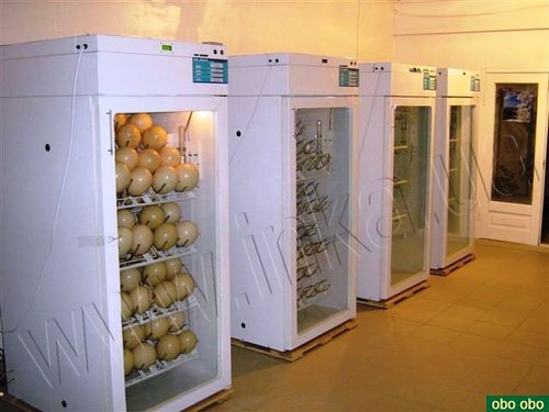 Инкубатор для гусиных яиц автоматический